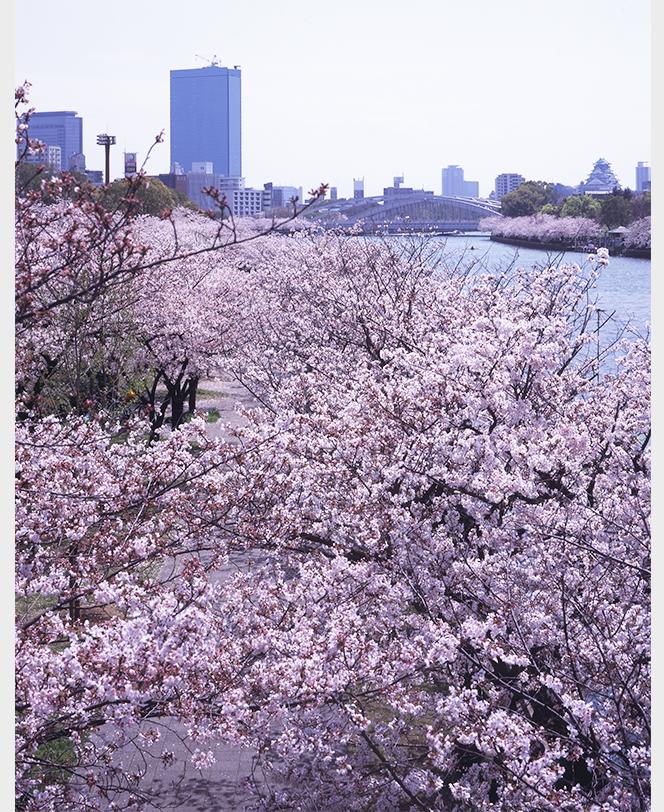 桜の会・平成の通り抜け, 大阪府, 2004年